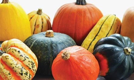 Brighten the Season with Winter Squash