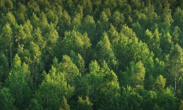 Trees added to national forests thanks to the single-use device (SUD) reprocessing