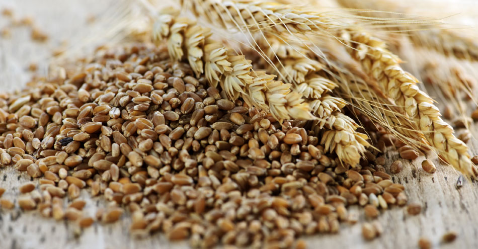Compounds May Explain Whole Grain Health Benefits